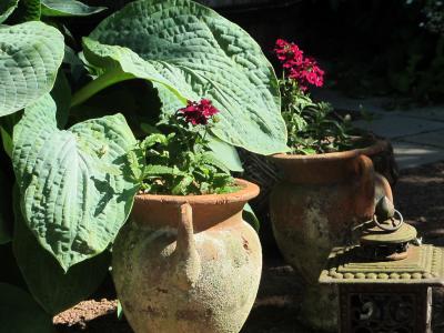 Kuunliljat peittävät kukkasipulien kukkineet kukkavanat