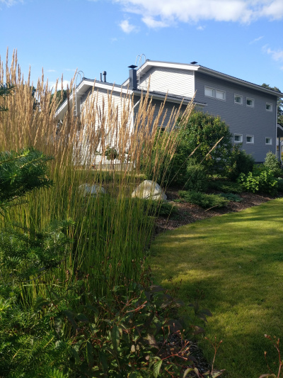 Koristeheinät, kukkivat pensaat ja matalat havut luovat skandinaavisen tyylin